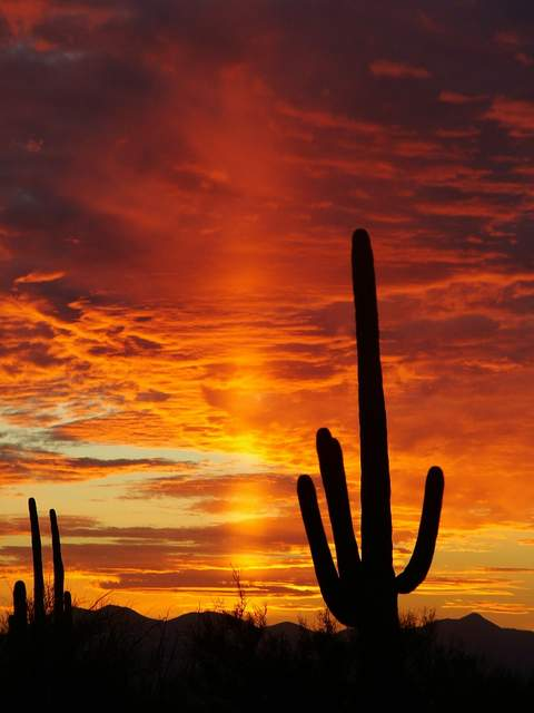 Sunset_in_Saguaro_National_Park